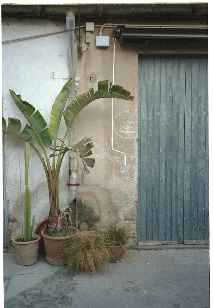 Palma015.jpg