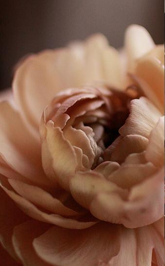 http://christinerochetjacob.blogspot.ca/