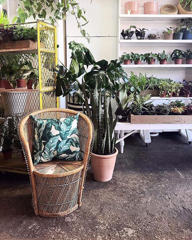 Oh Hi 👋🏻! I see you 🌿🌿🌿 . . . #ALWAYSxALWAYS #AxAmoodboard #plantsofig #plantlover #houseplant #crownflora #toronto