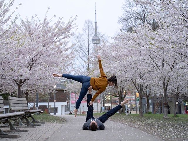 I forgot how much I love Acro Yoga! Have you tried it? . Kicked-off my first acro session of 2019 early, early this morning, outside among the dreamy cherry blossoms with Brad and Sara at Trinity Bellwoods! @bradstrickert @_smillz_ . I'm officially back! ☺️🌸 . . Beautifully captured by @bradstrickert . . . . #acroyoga #yoga #toronto #cherryblossoms #trinitybellwoodspark #blogto