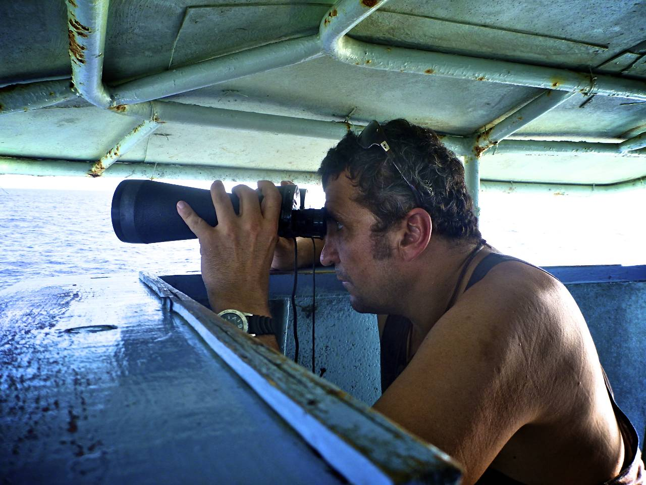 looking for diving birds.jpg