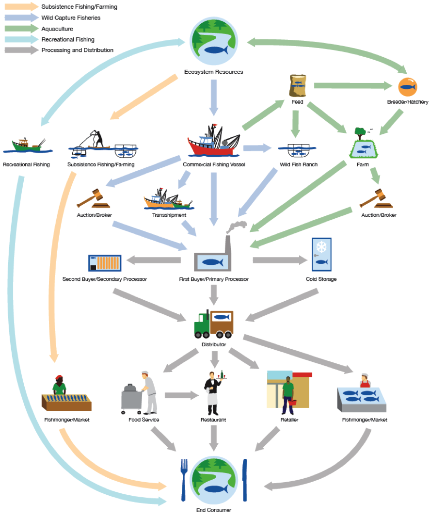 Cool illustration on the complexities of traceability in seafood, by fishwise.org