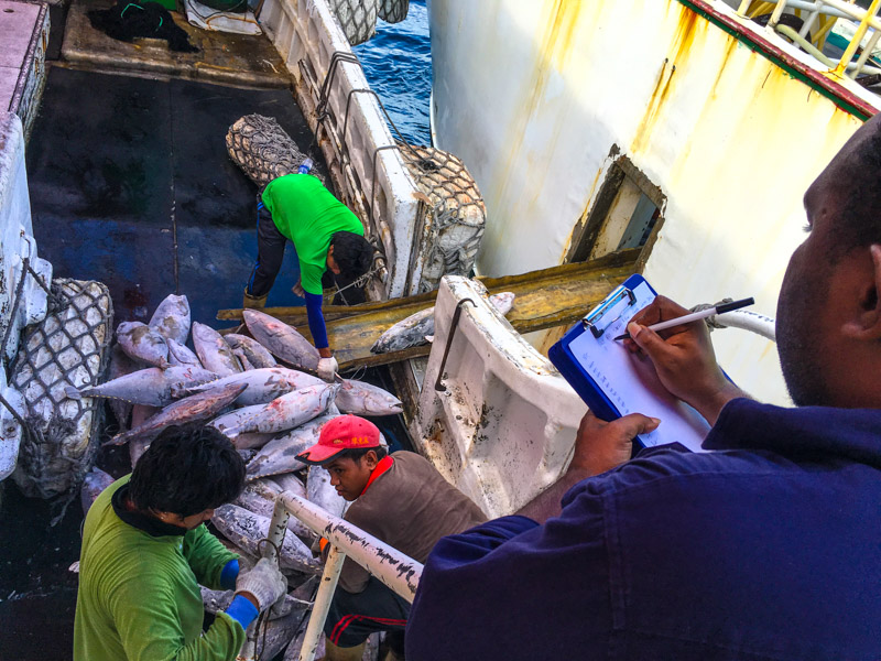 Counting fish any day any time at transhipment.