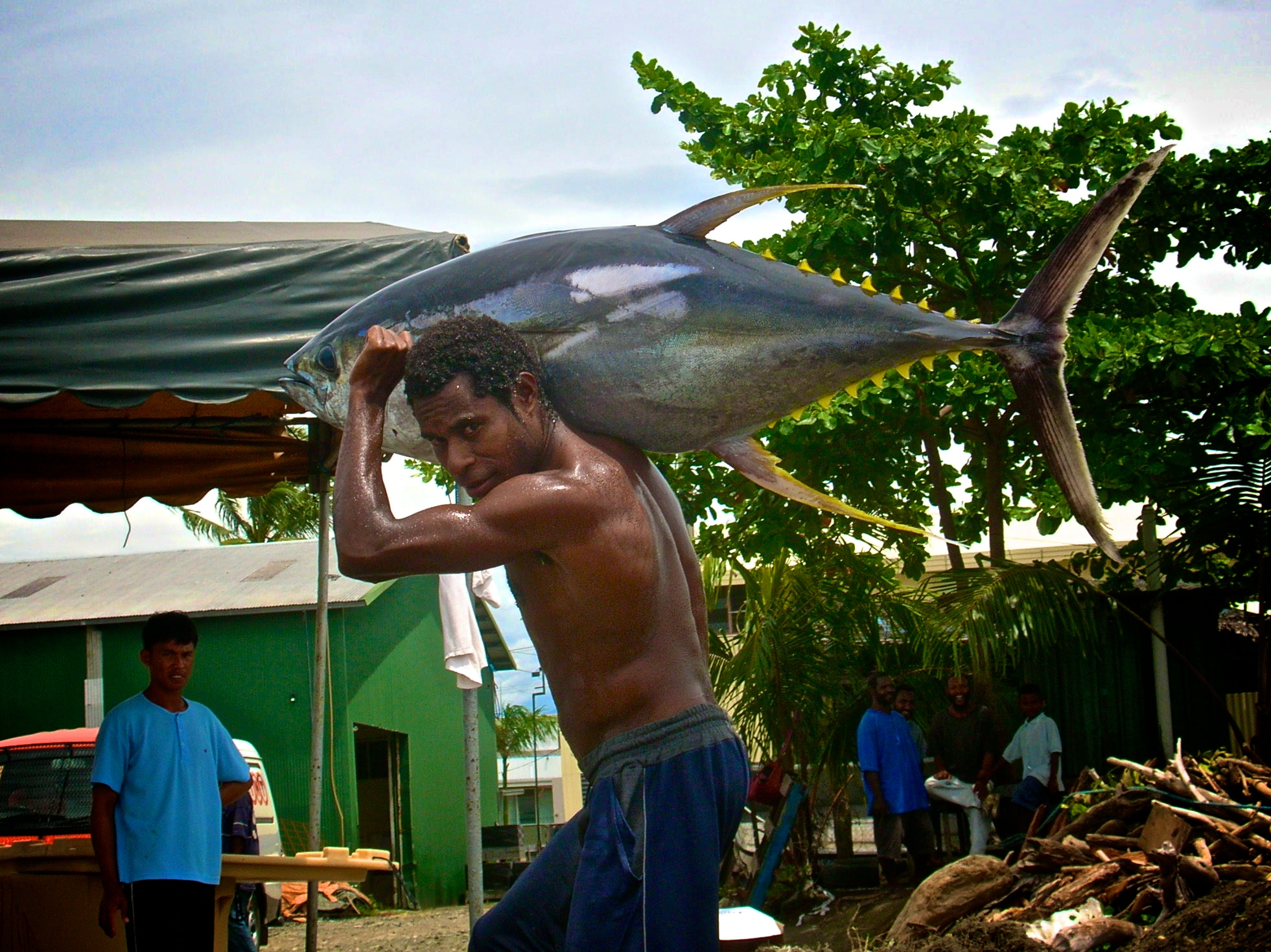 is more than just a fish... is life for the pacific islands. (Pic by my brother Hugh Walton)