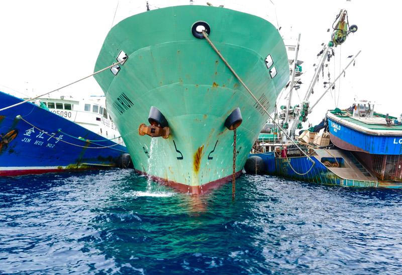 fisherman fish, traders rule
