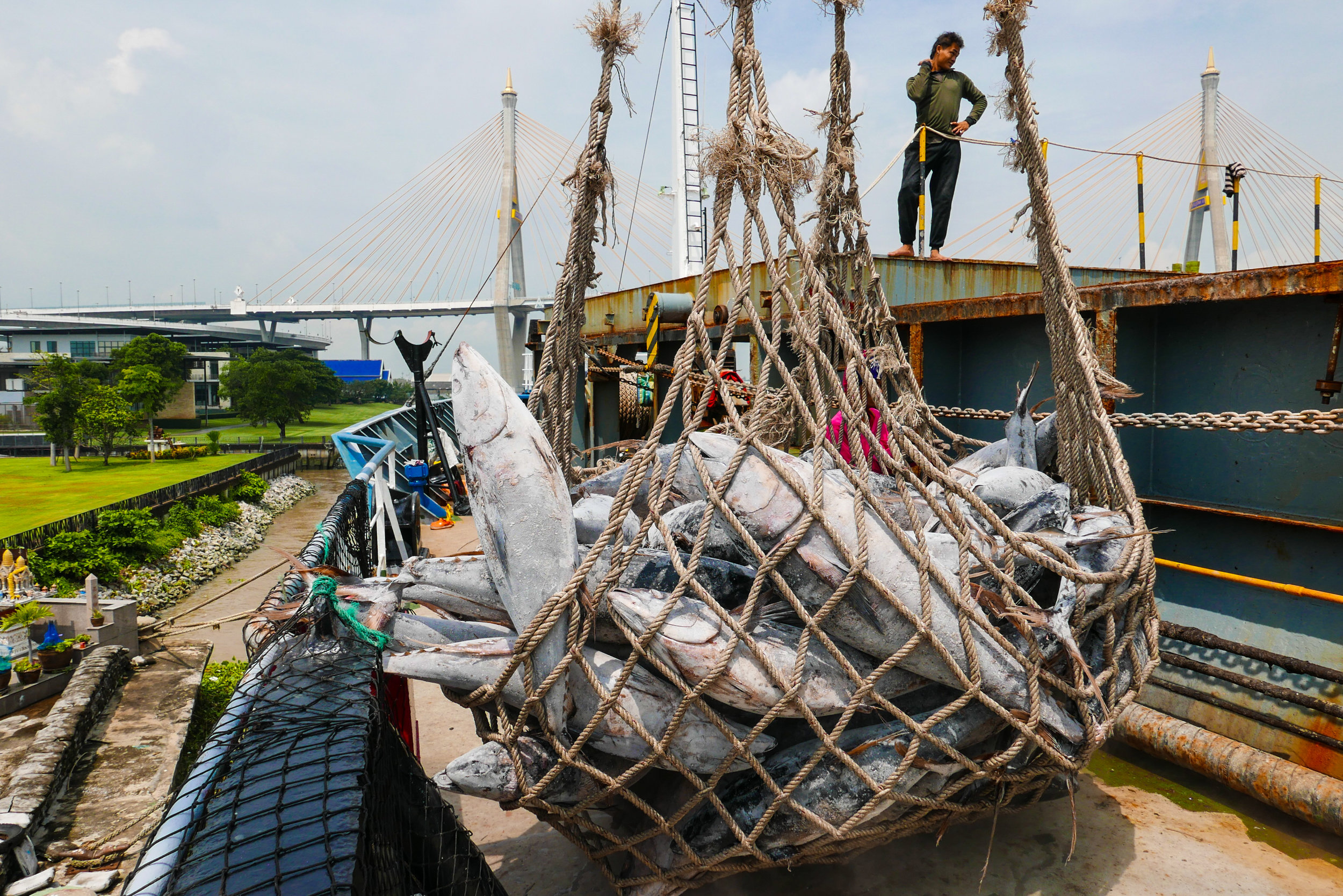 Tuna caught on a PNG flagged vessel, then transhipped in Majuro being unloaded in Bangkok (I been lucky to be in the 3 events!)