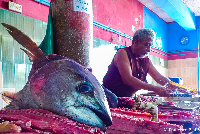 Male Fish Market Maldives