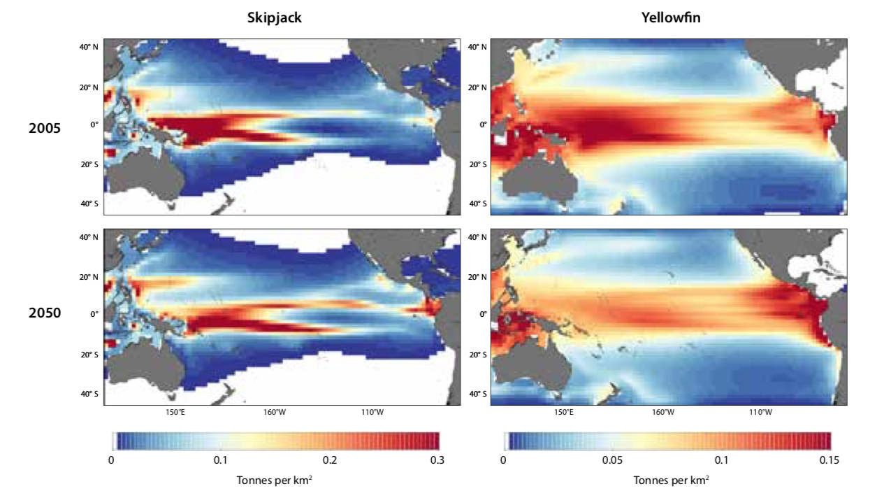 Figure 2. Projected distributions of skipjack and yellowfin tuna biomass in the Pacific Ocean in 2005, and in 2050 under a high greenhouse gas emissions scenario
