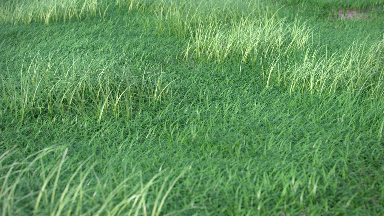 GrassGen_Render_001.png