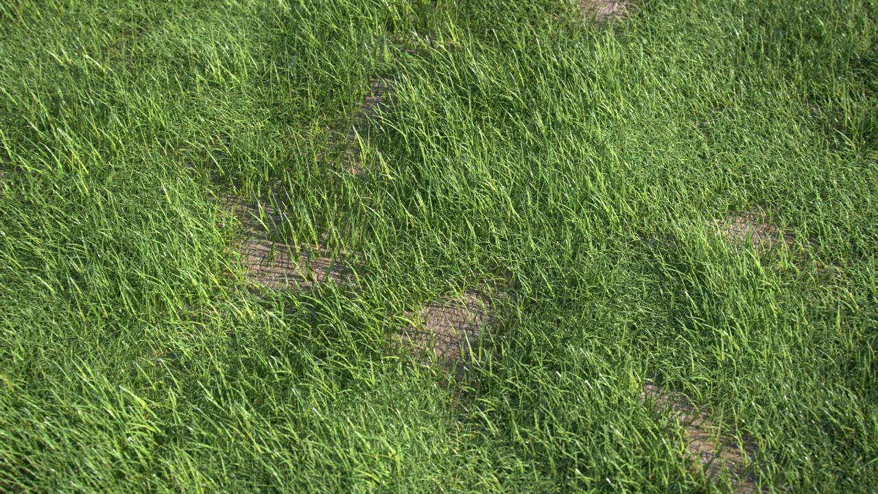 Grass_Gen_Title_NK.png
