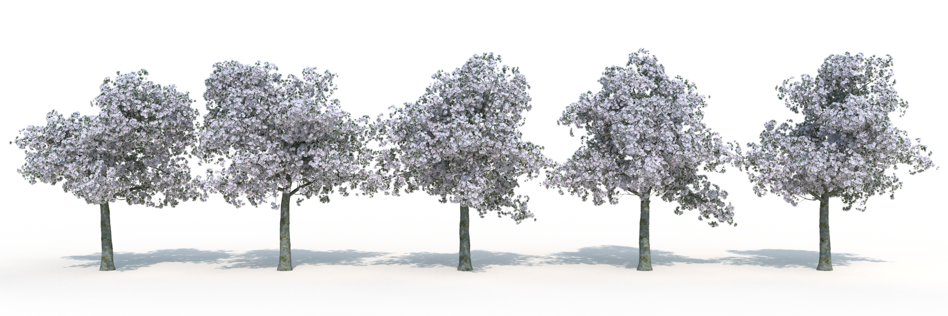 Here's a front view of all five trees, rendered with the included textures.