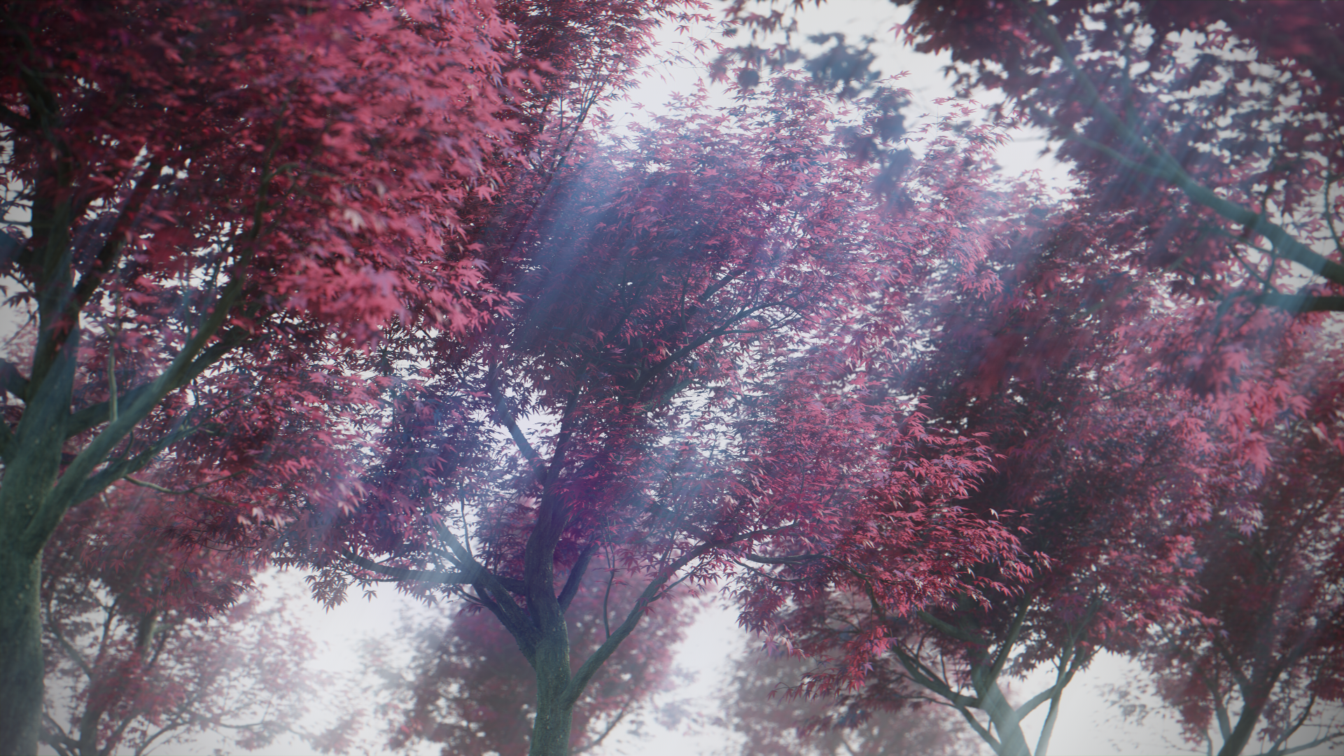 japanese_maple_render.png
