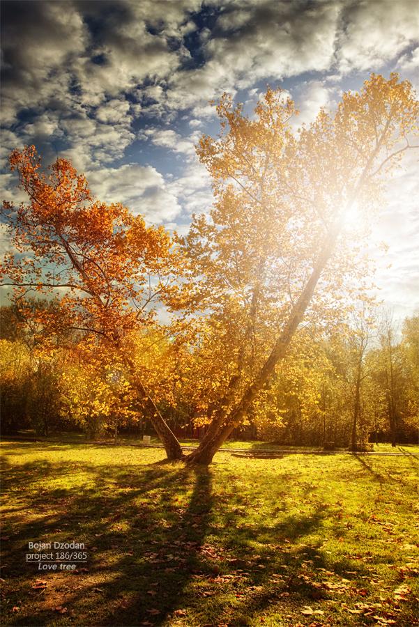 Love treefb.jpg