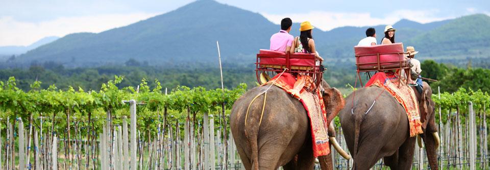 3-elephant-ride-2.jpg