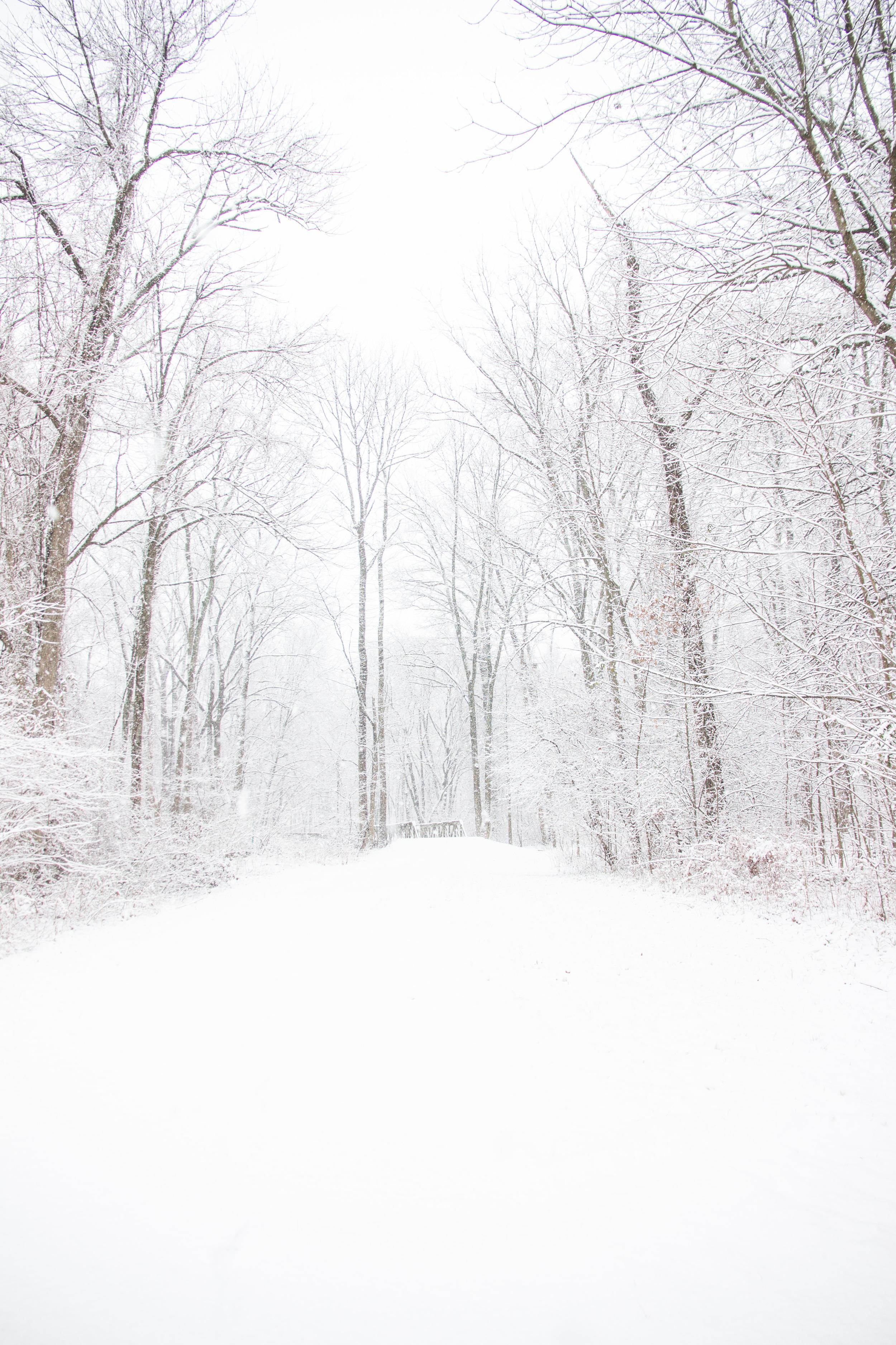 Snow-0079.jpg