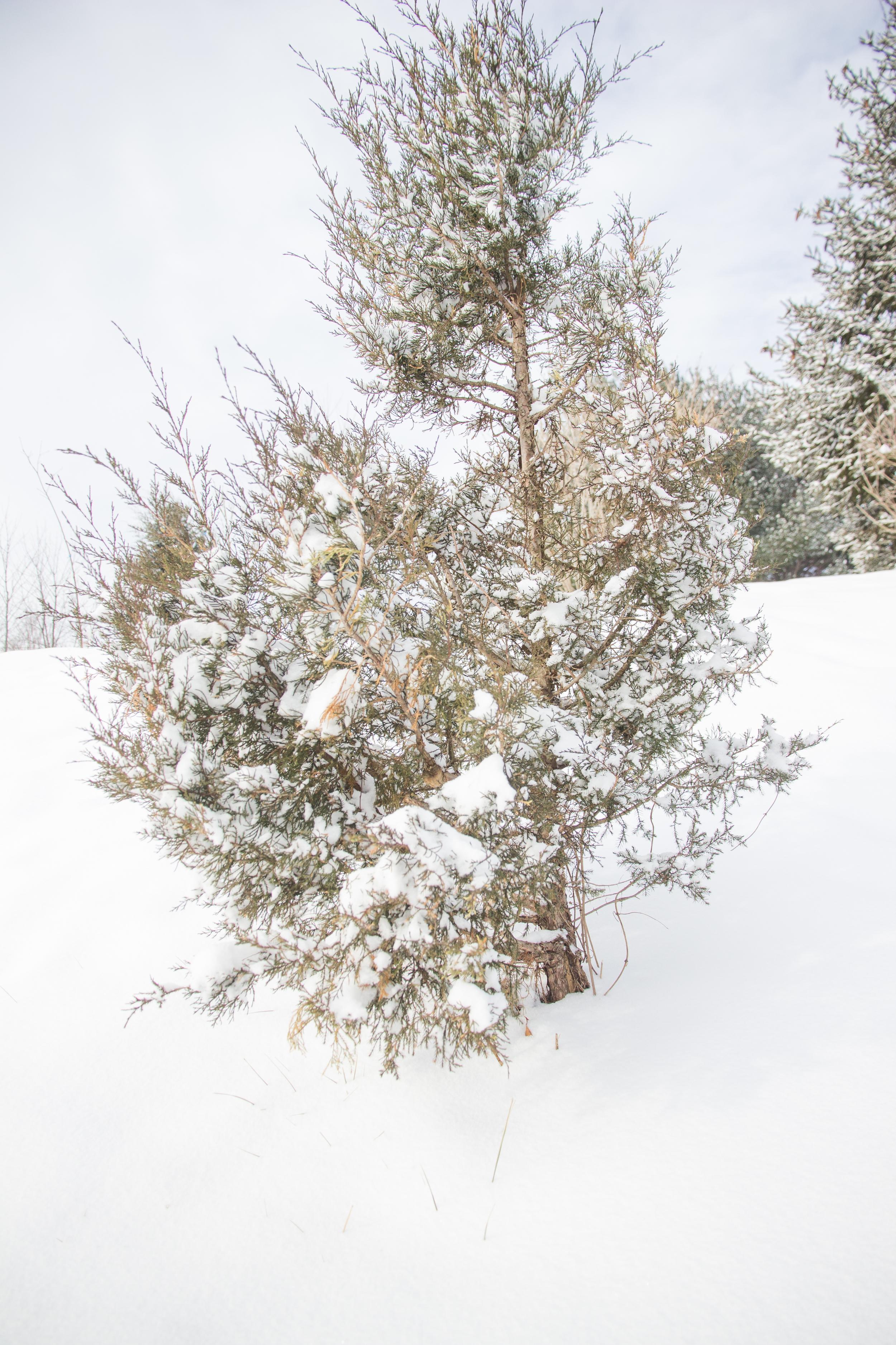 SnowDay-3.jpg