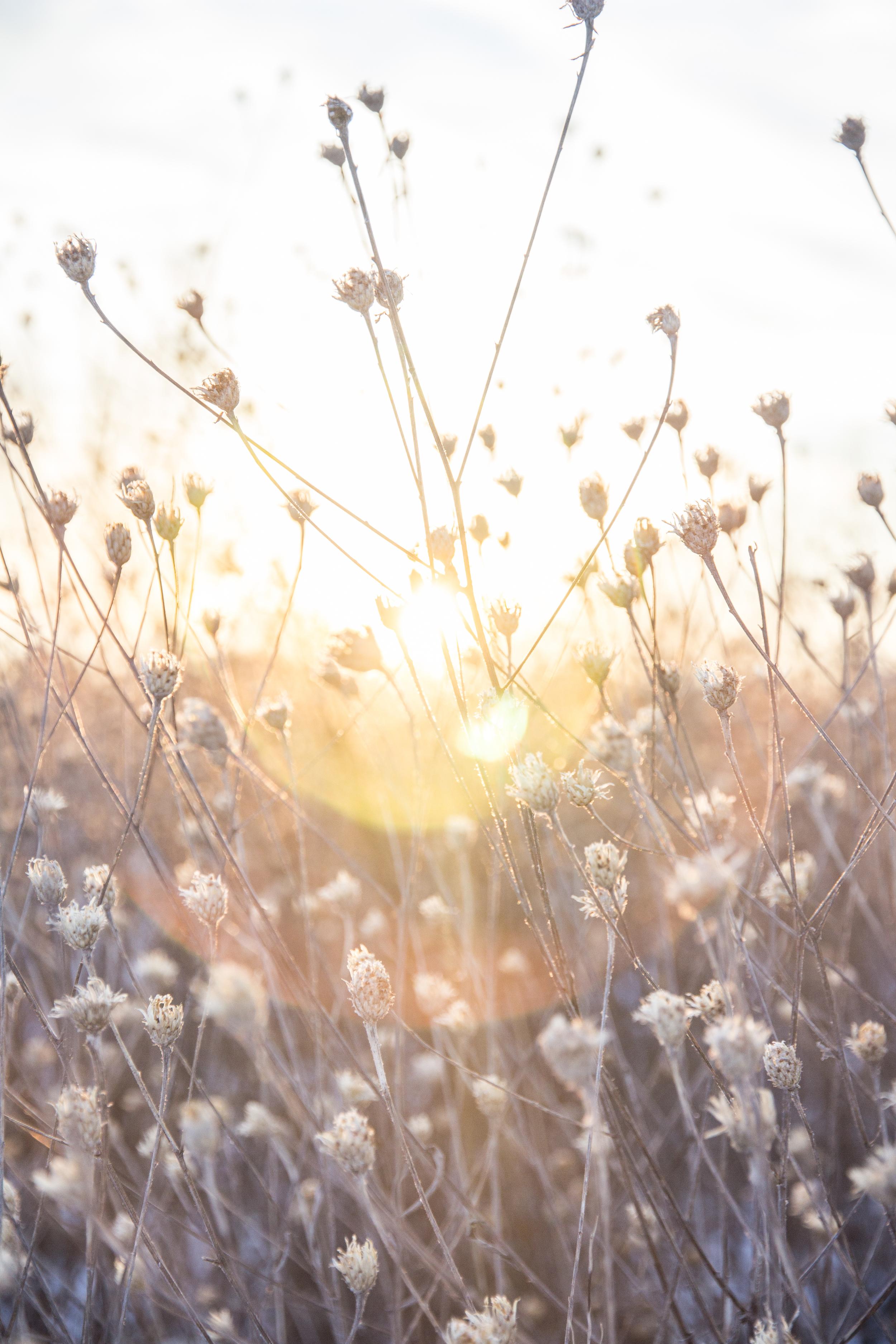 SunsetConservancy-18.jpg