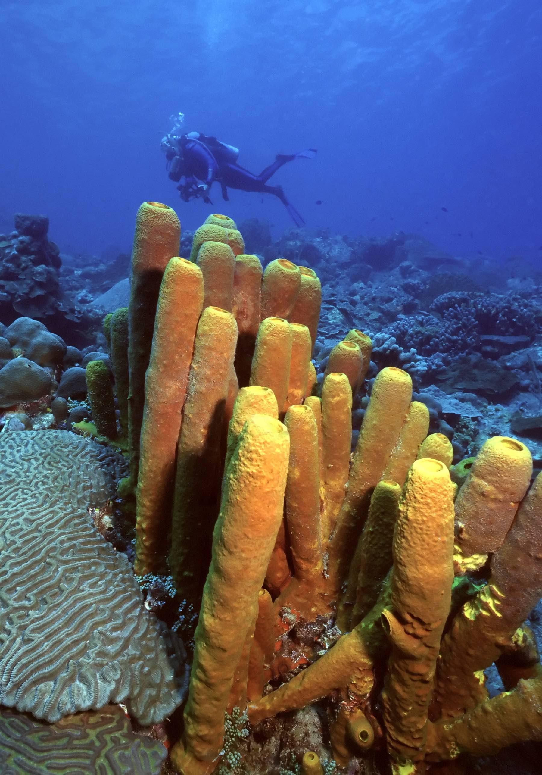 iStock_000000442534_Grenadines diving copy.jpg