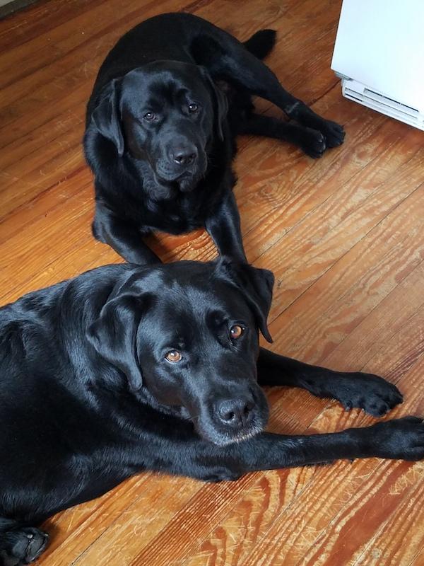 batchelor-dentisty-dogs.jpg