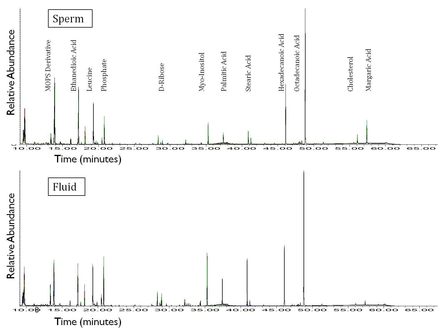 GC-MS profile of epididymal sperm and fluid (domestic cat)