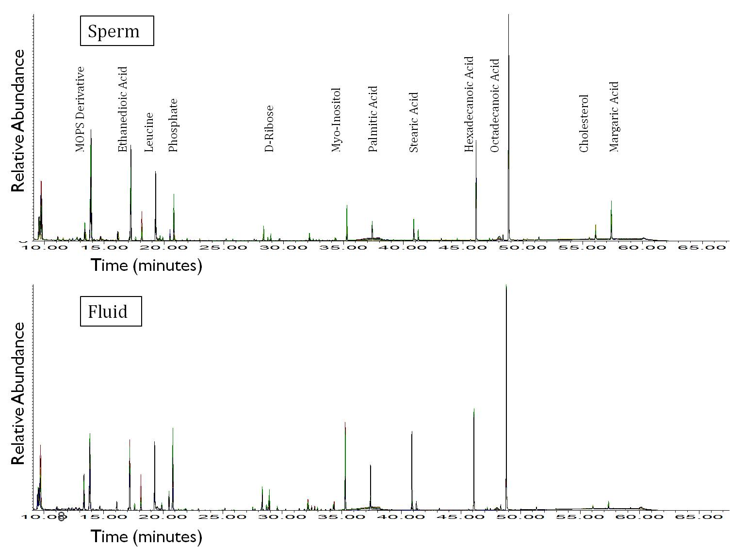 Total Ion Current (TIC) chromatograms summarizing the intensities of mass spectral peaks from the GC-MS analysis of spermatozoa from an individual domestic cat.