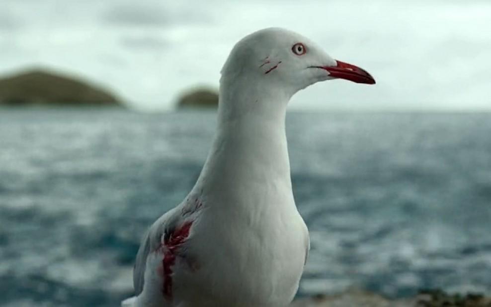 """Various seagull noises"""