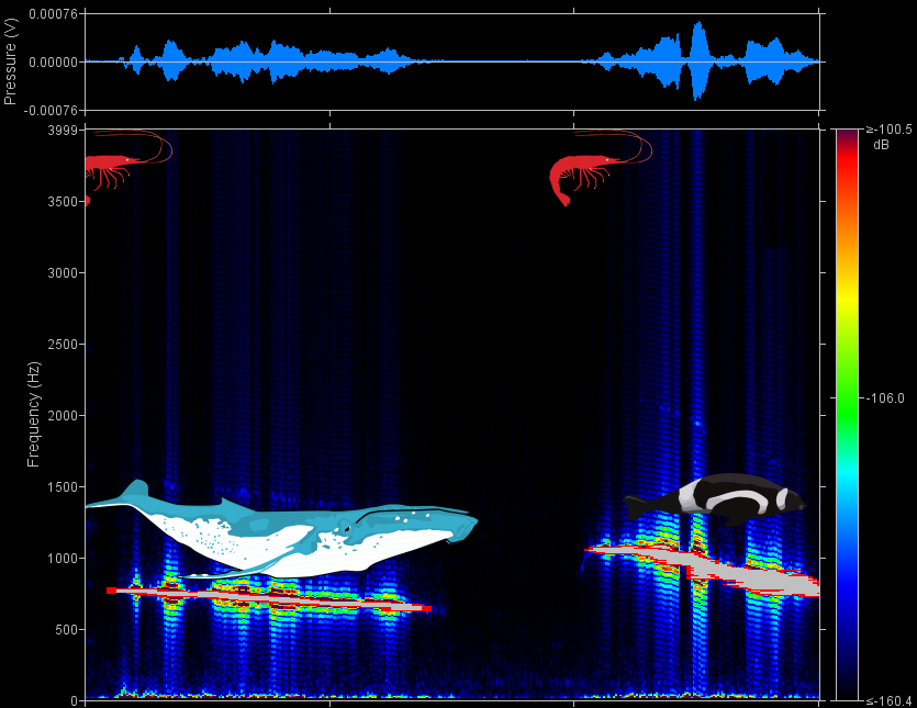 JASCO's specialized detection software modified to tell users what marine species they sound like