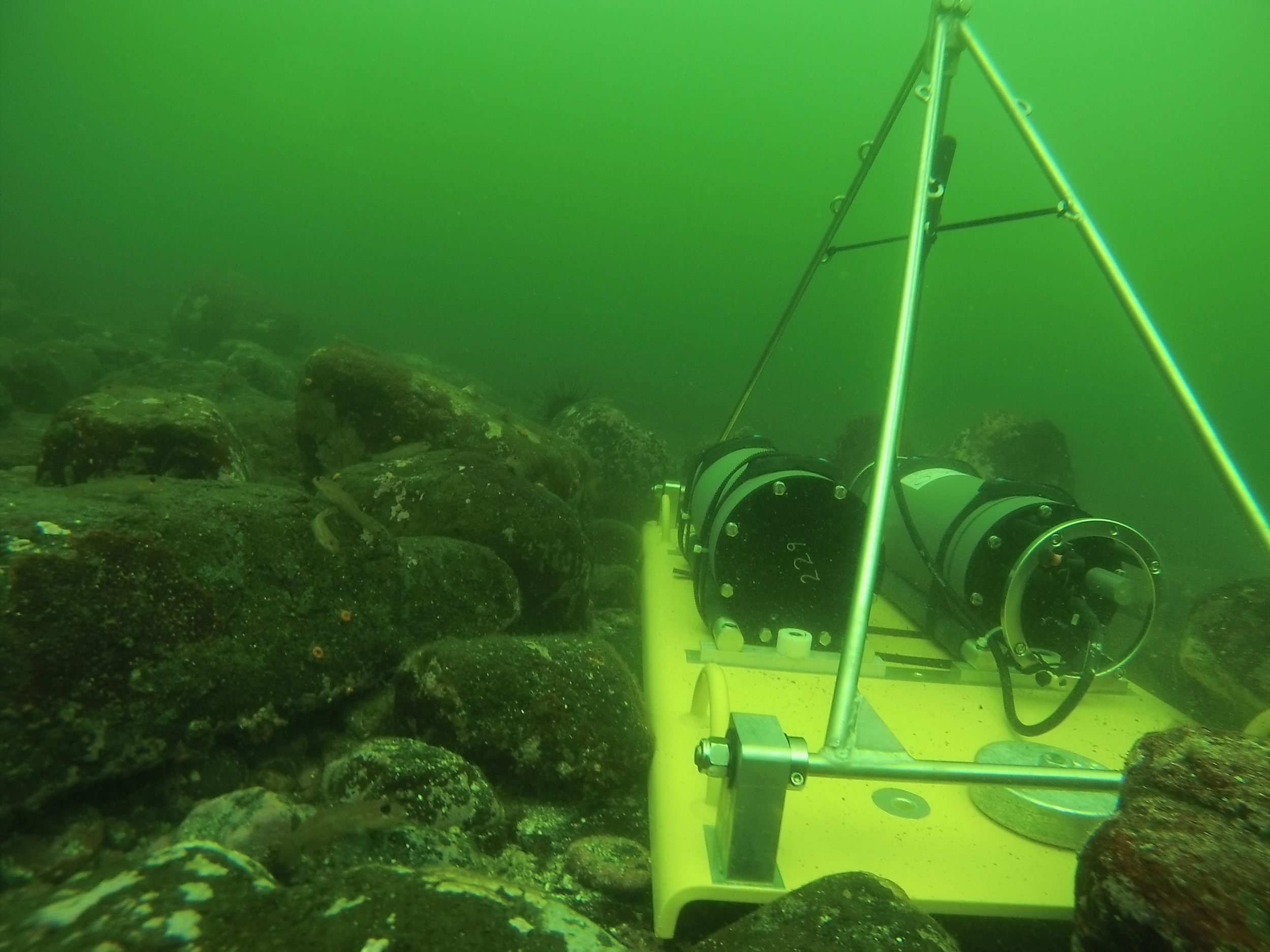 Underwater view of an AMAR recording sound near the south shore of Hornby Island.