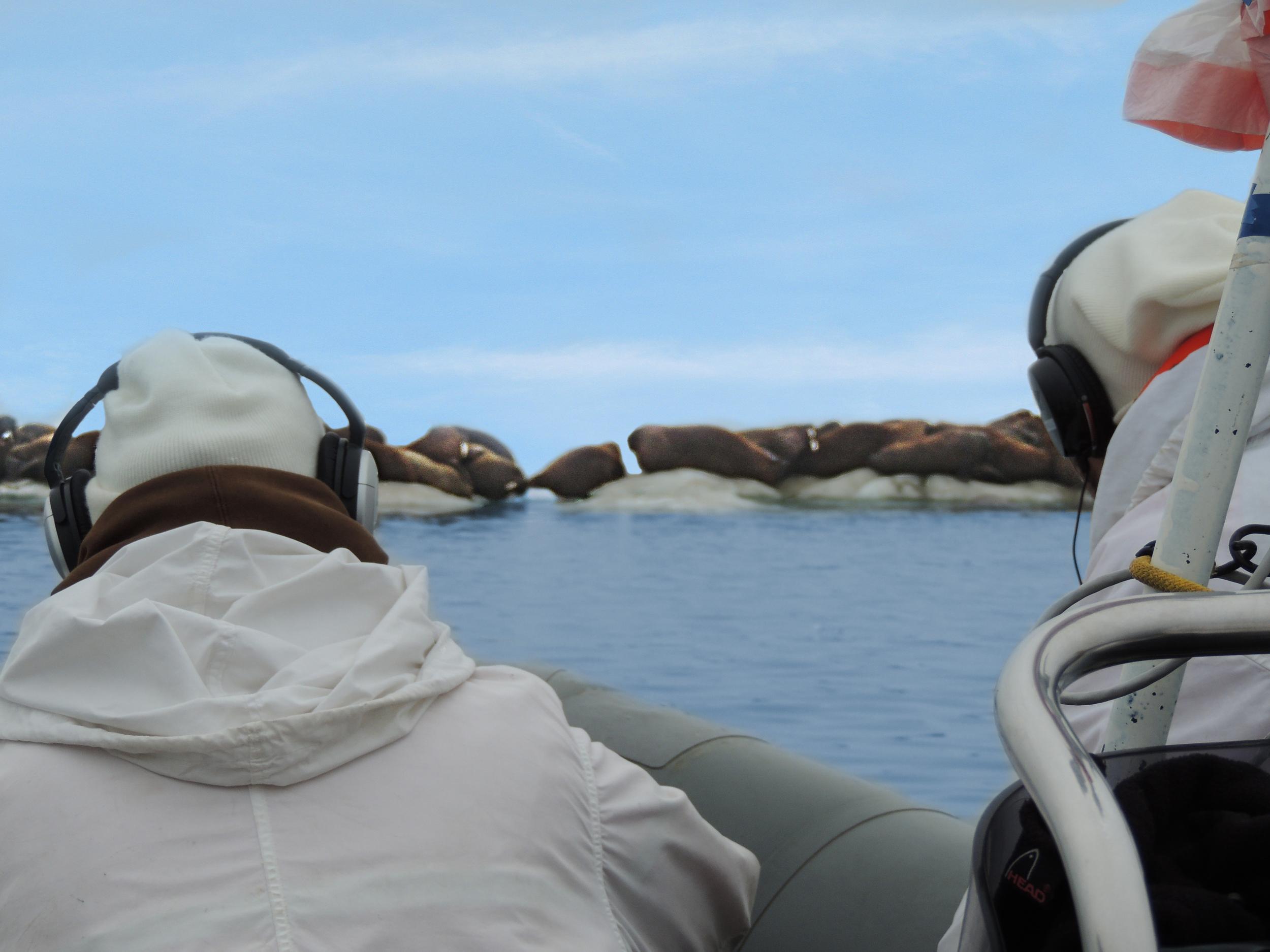 Passive acoustic monitoring of Pacific walrus (Odobenus rosmarus divergens) in the Chukchi Sea, Alaska