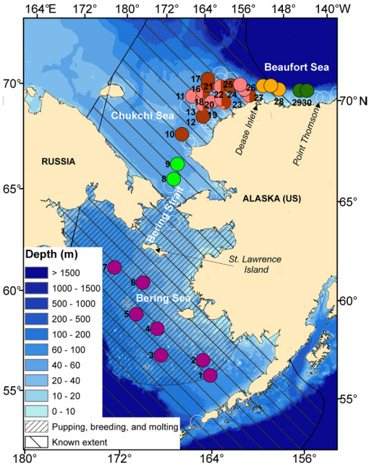 The year-long dataset comprised 53 acoustic recorders - The 53 acoustic recording sites spanned five zones within the Bering, Chukchi, and Beaufort Seas. Ribbon seal downsweep calls were detected on 30 of them and are color-coded by zone. Recorder sites without ribbon seal detections are white circles. This is Fig. 3 from their article in Polar Biology.