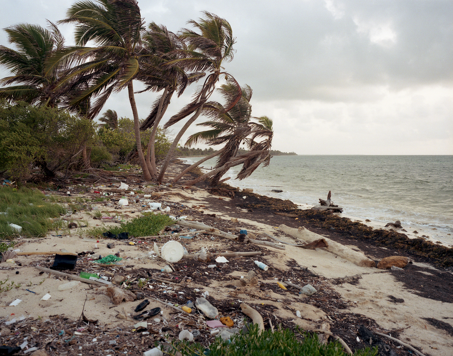 Coconut trees surrounded by multiple pieces of waste plastic, much of which is 'one time use'. South of Mahahual.