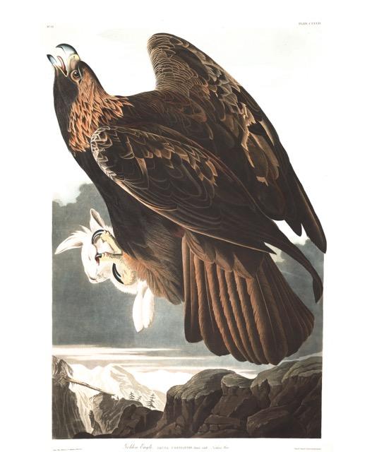plate-181-golden-eagle-600.jpg