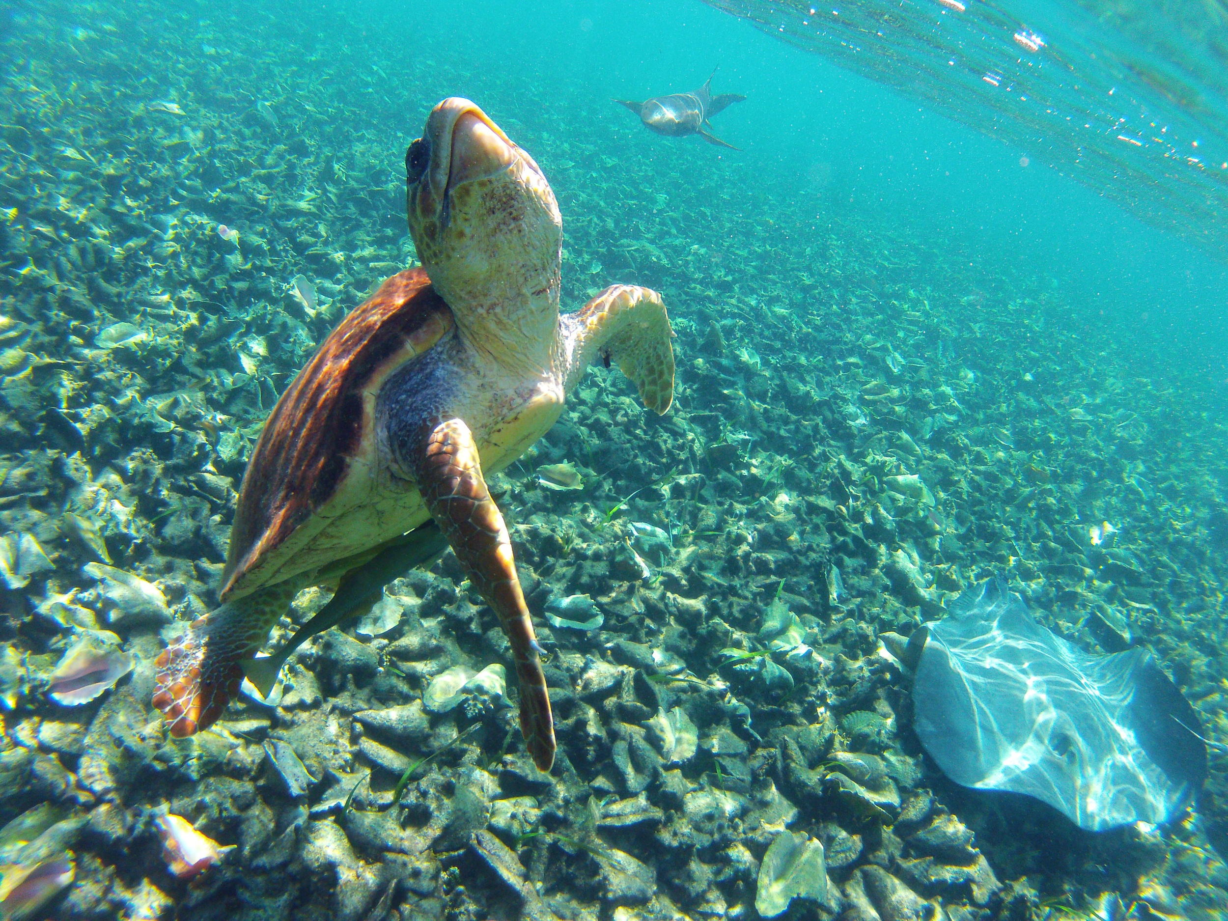Snorkelling and diving at the Hol Chan Marine Reserve provides for close encounters with the local marine life