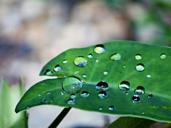 How do you Dew?