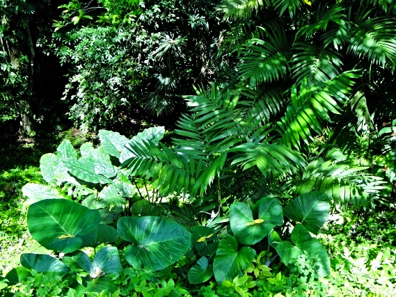 Tropical Foliage - Belize Vacation Packages - SabreWing Travel - Photo by David Berg