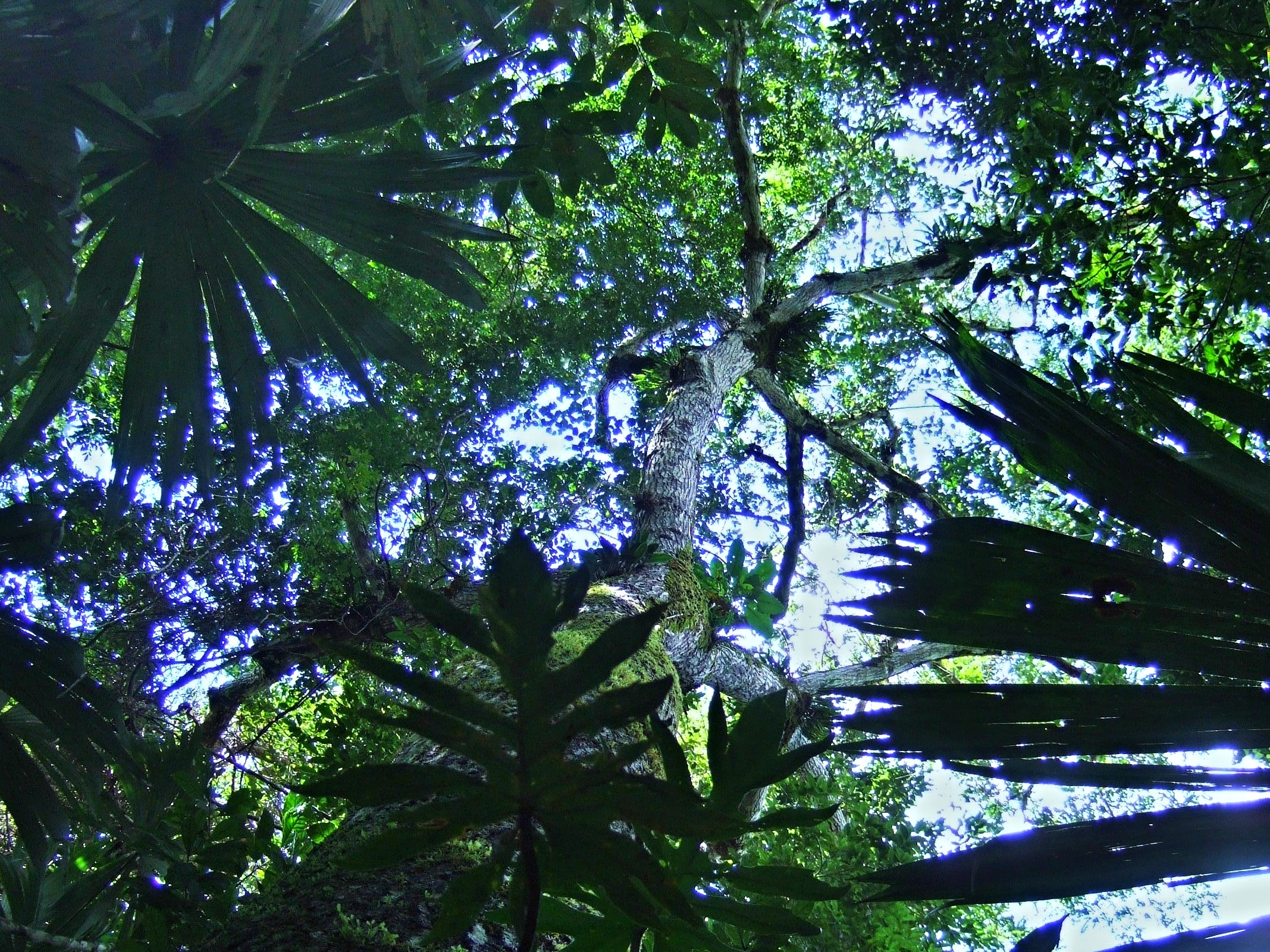 Cayo District Rain-forest - Belize Jungle Vacation - Belize Vacation Packages - SabreWing Travel