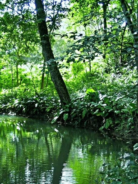 Belize1 130 (456x640).jpg