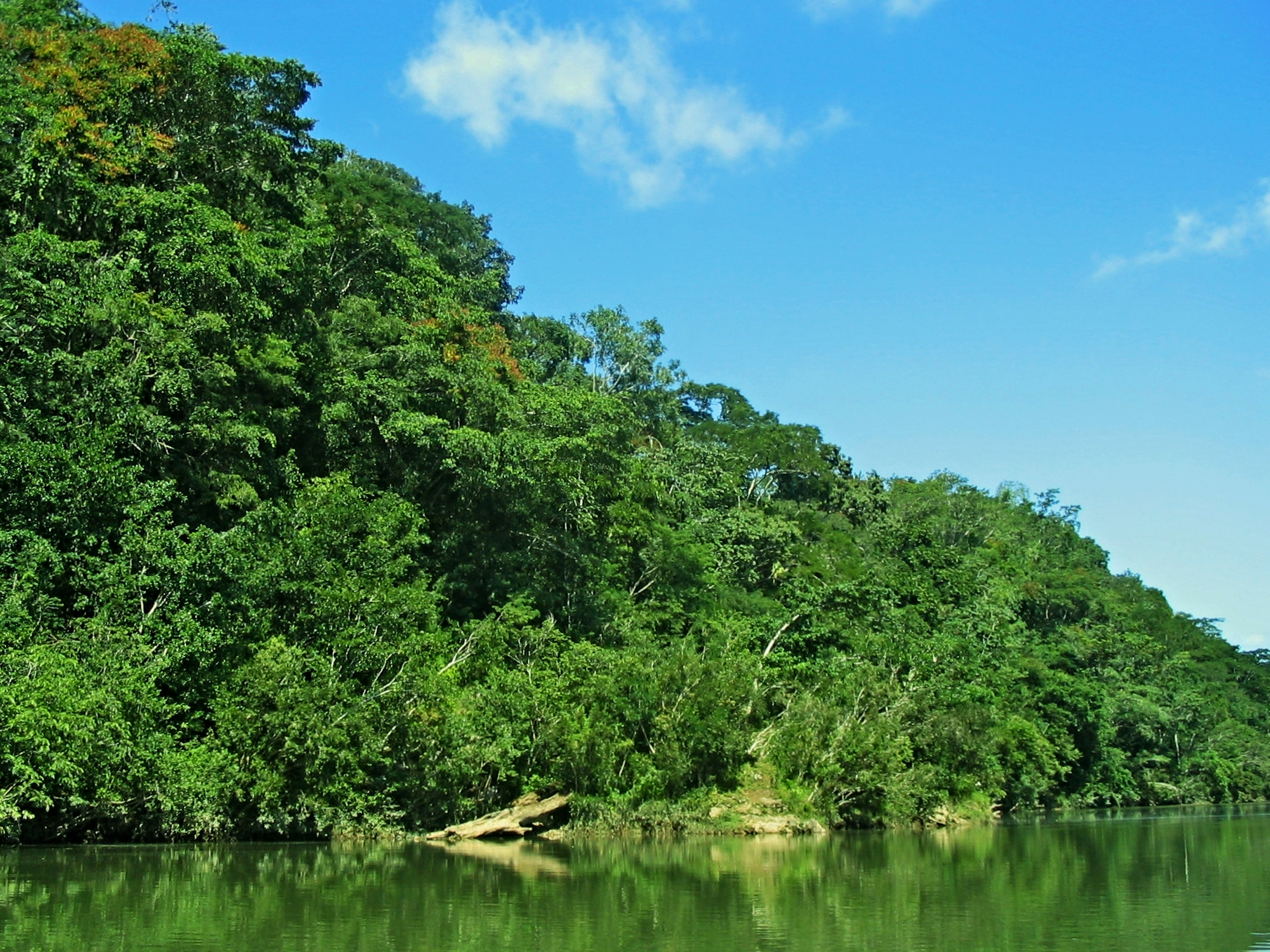 Macal River - Cayo District Rain-forest - Belize Jungle Vacation - Belize Vacation Packages - SabreWing Travel