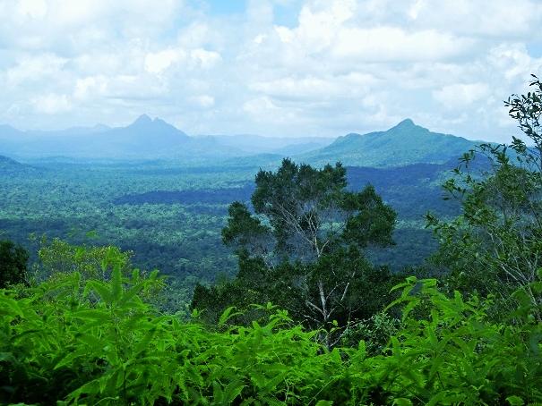 Cockscomb Basin Wildlife Sanctuary - Belize Jungle Vacation - Belize Vacation Packages - SabreWing Travel - Rainforest