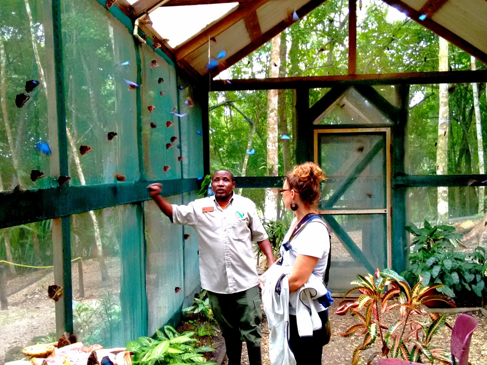 The Blue Morpho Butterfly enclosure at the Chaa Creek Natural History Center