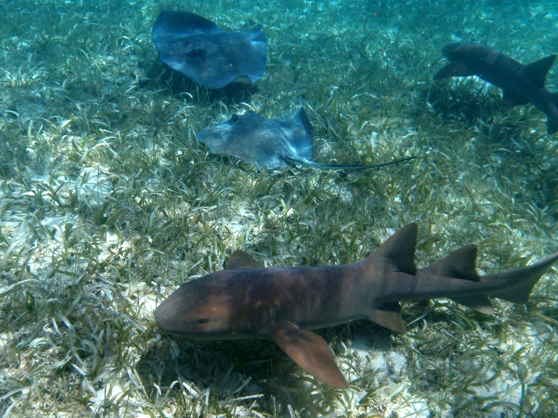 Get up close and personal with nurse sharks and southern sting rays at Shark Ray Alley