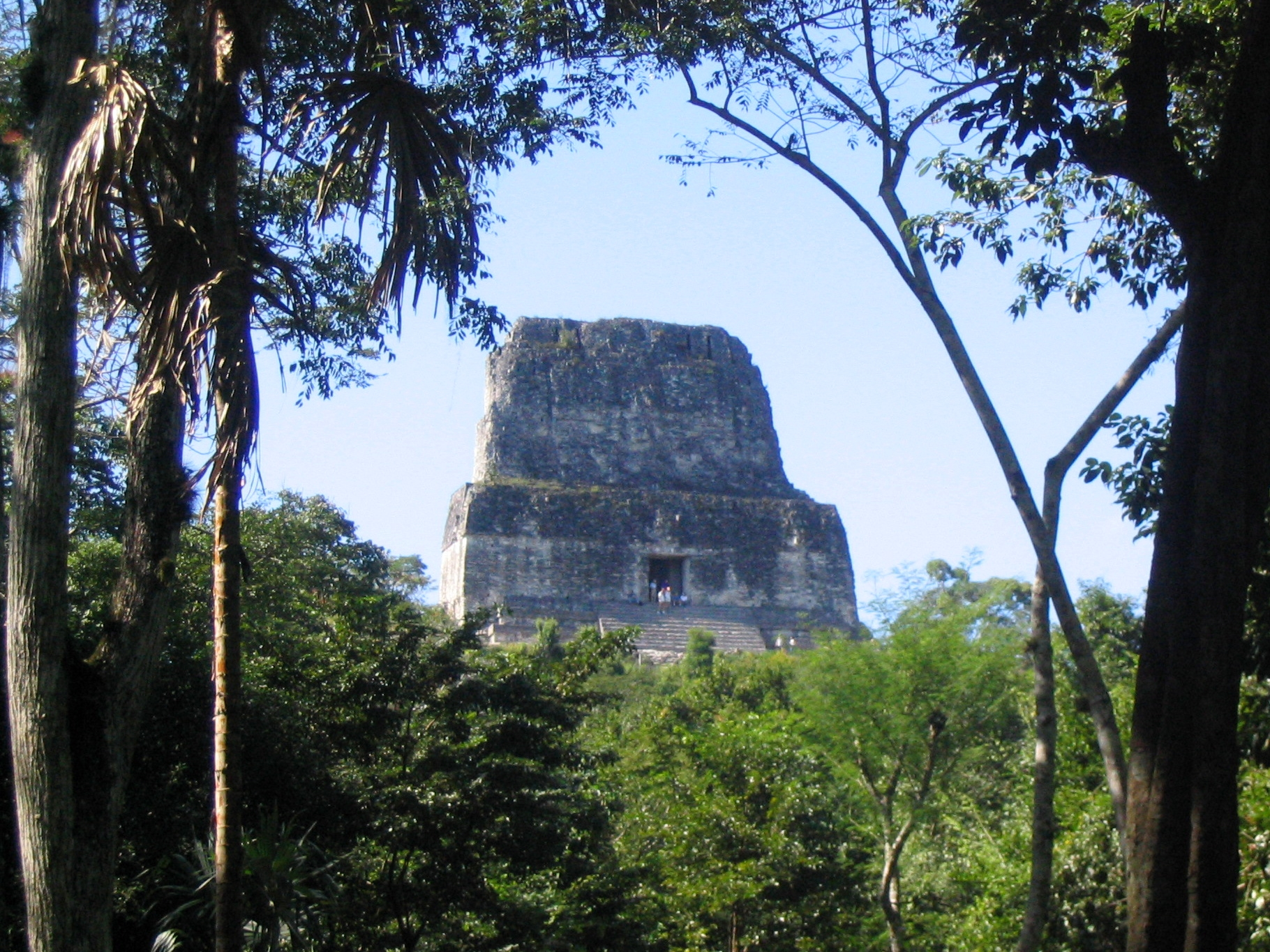 The top of Temple IV is just visible through the canopy as one looks up from below