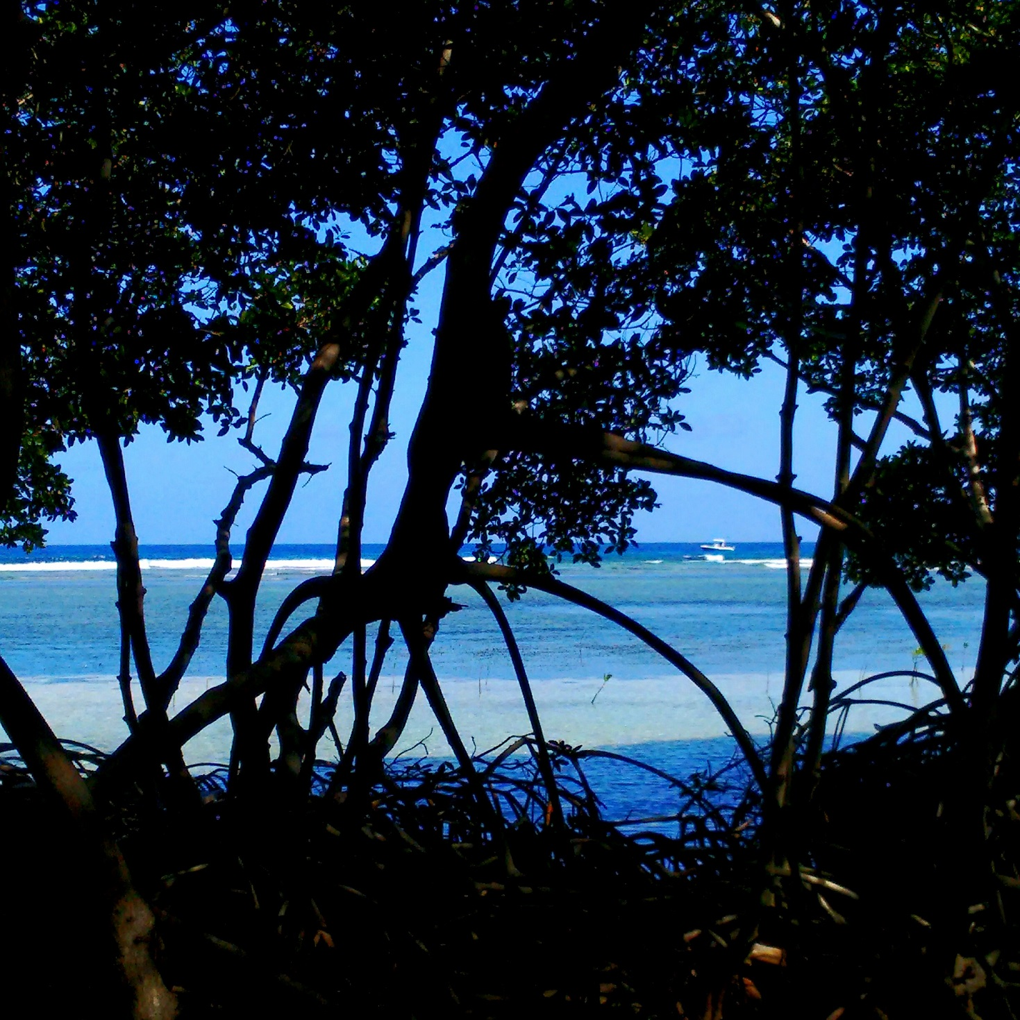 The mangroves hold the beaches in place and provide a crucial nursery for marine wildlife