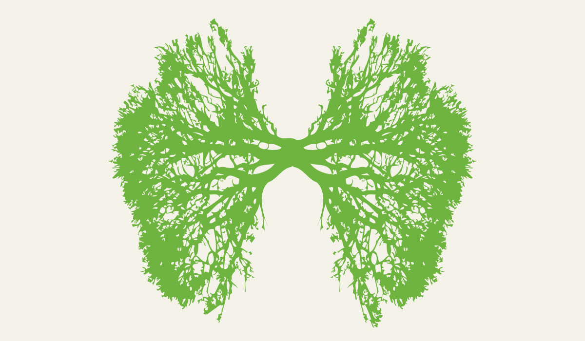 jkdc_greenteam-respiration.jpg