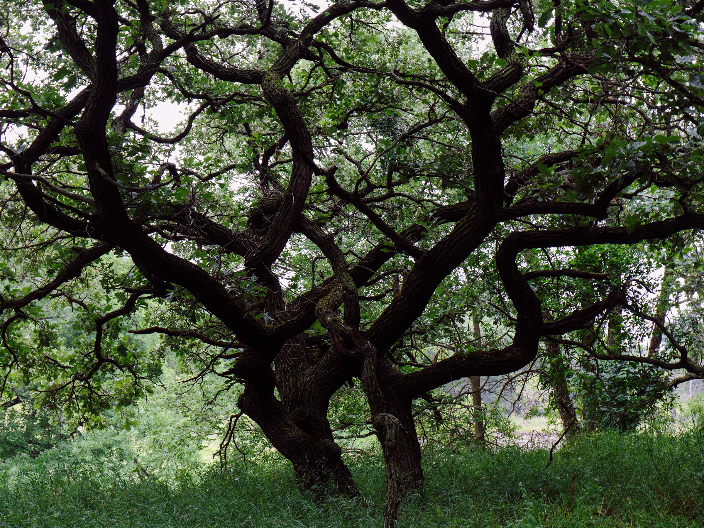 Olson Nature Preserve