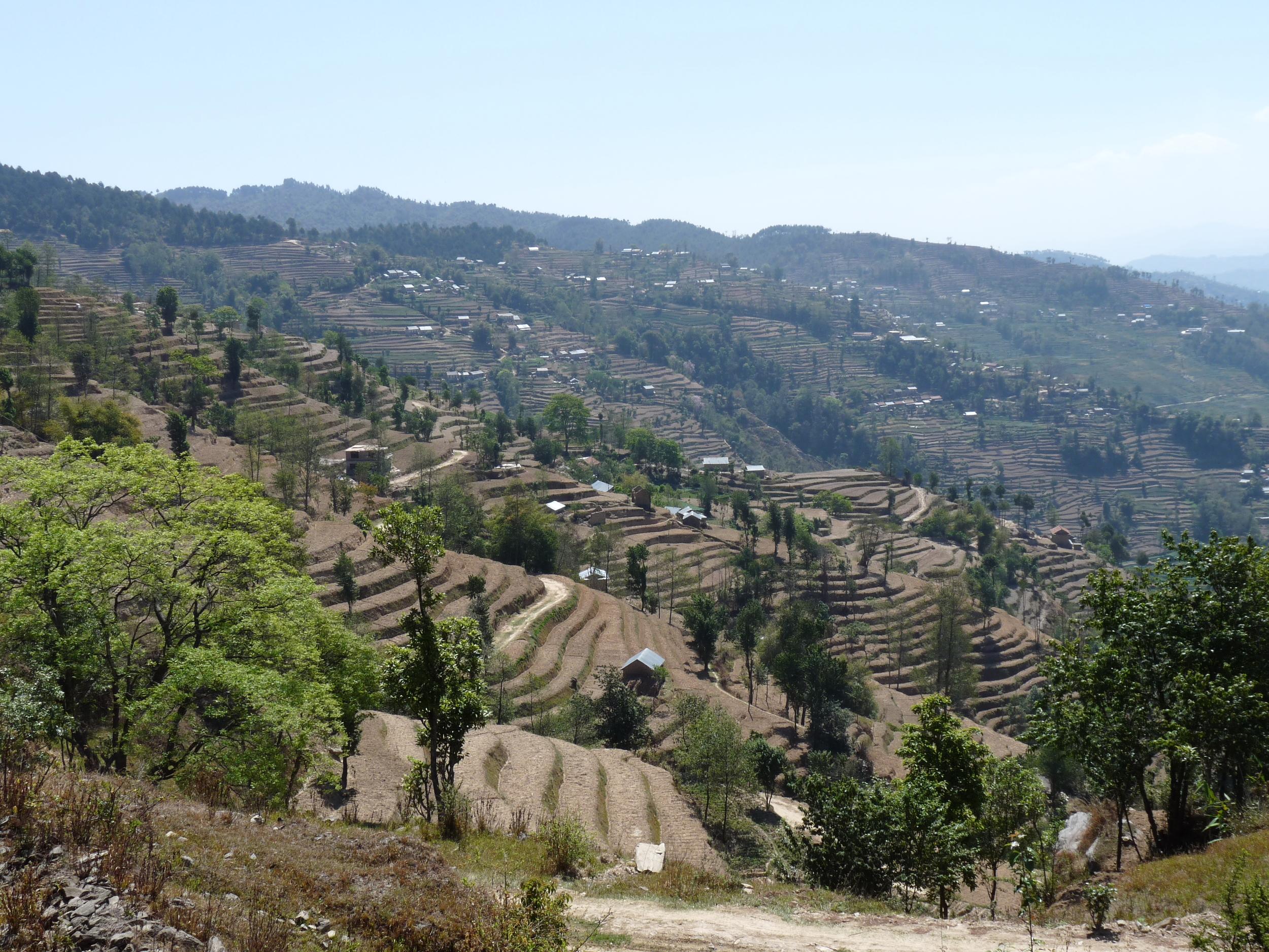 Les rizières permettent d'augmenter la surface cultivable et de mieux conserver l'eau