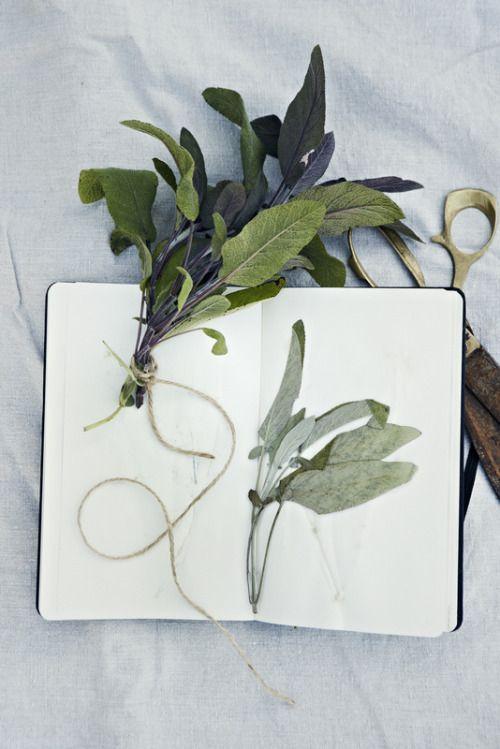 sage botanical.jpg