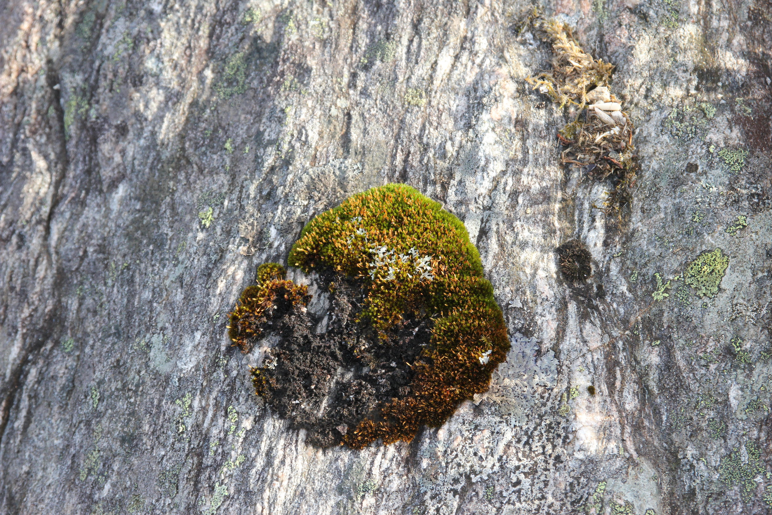 Moss and Lichen on Rocks in the Forest.
