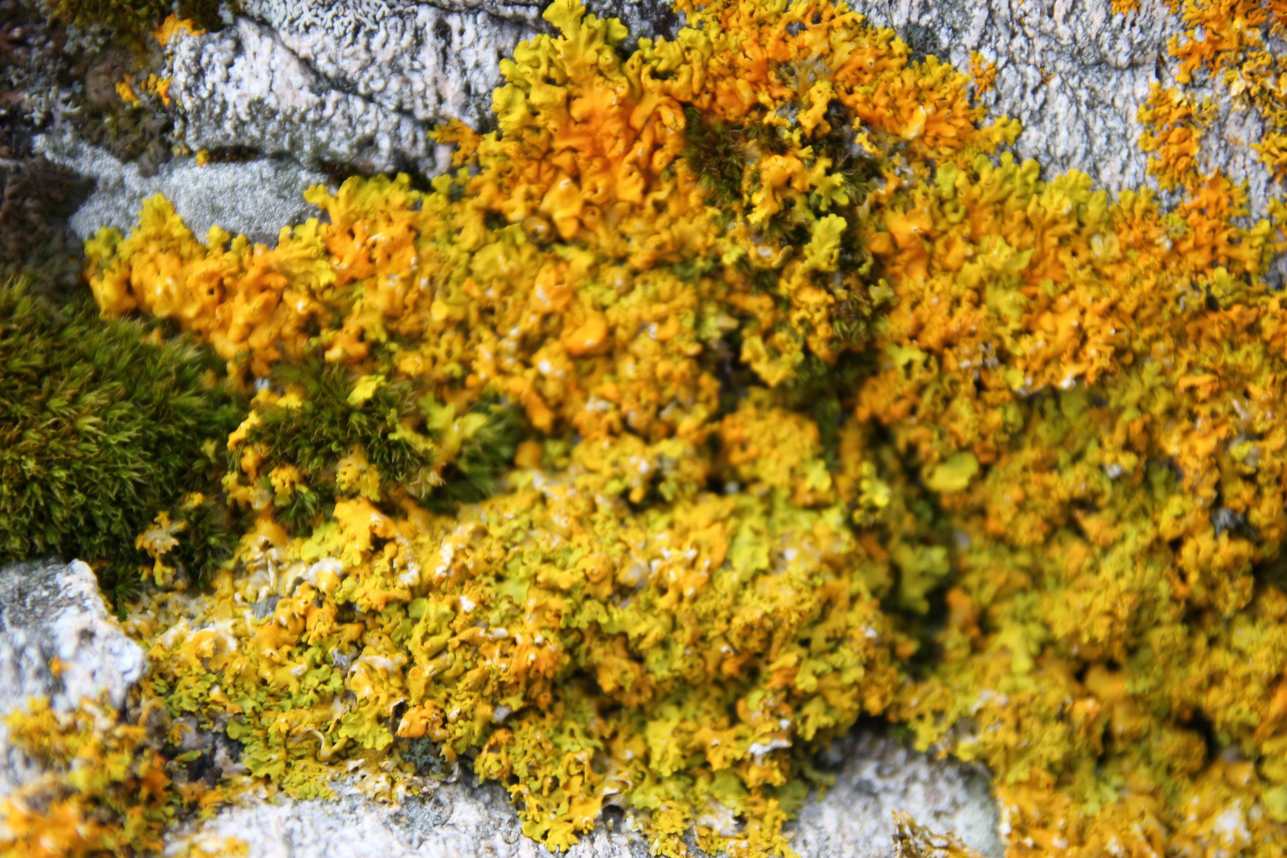 Algae, moss and lichen on rocks.