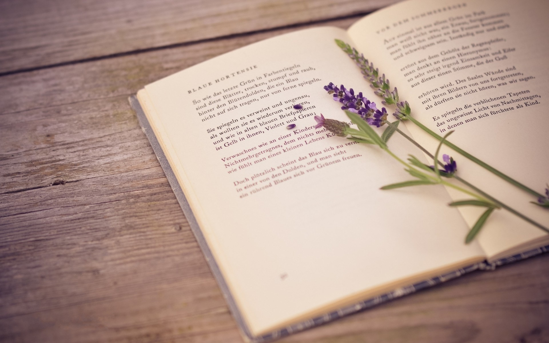 lavender and book wallpaper.jpg